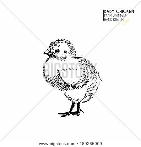 Vector hand drawn set of farm animals. Isolated baby chicken. Engraved art. Organic sketched farming birds. Use for restaurant, menu, grocery, market, store, party, meal