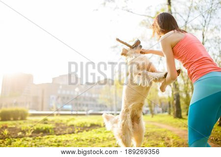 Brunette with labrador dog playing with stick on spring lawn