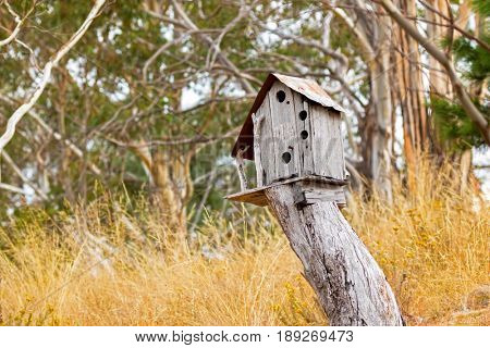 Simple wooden bird house on top of tree stump surrounded with yellow grass meadow field, Autumn in Tasmania, Australia