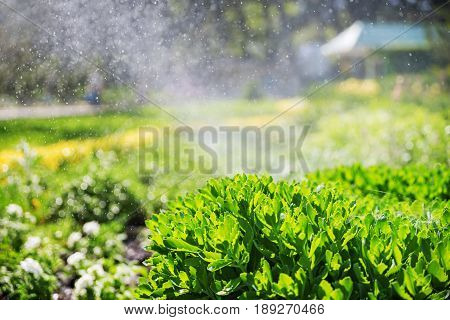 Beautiful Landscape With Automatic Sprinkler Spraying Watering The Lawn In The Home Garden With A Ra