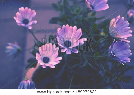 Beautiful clear capture of summery pink flowers