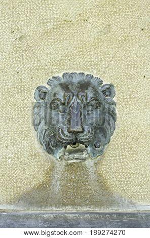 Lion Copper