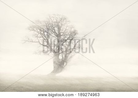 A field in Scandinavia covered in mist