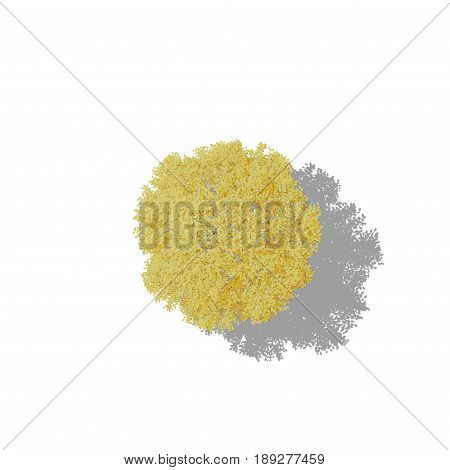 Aspen tree. Isolated on white background. 3D rendering illustration. Cartoon style. Top view.