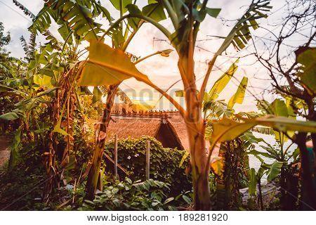 Sunset and banana trees on Bali, Indonesia