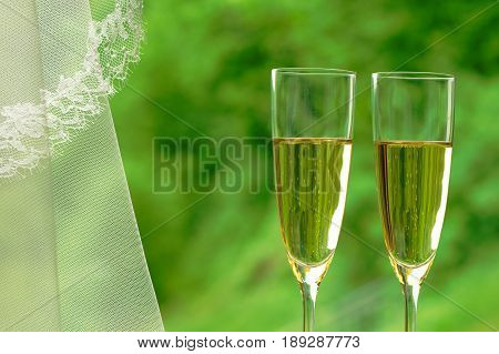 Wedding celebration: two flutes of sparkling champagne and a wedding veil against green background