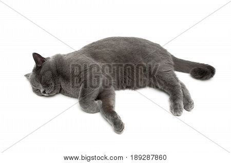 beautiful gray cat is sleeping on a white background. Horizontal photo.