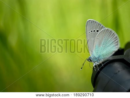 Lose weight diet side view green grass black tripod sits blue butterfly close view in blurred background dream easiness to flutter