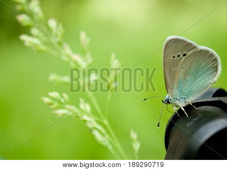 Lose weight diet side view green grass branch flower plant sitting blue butterfly close view on blurred background dream easiness to flutter