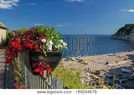 A pot of flowers on the background of a bay in the village of Beer. Devon. England