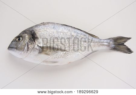 Dorado, Sparus, Bream Fish, Mediterranean Diet