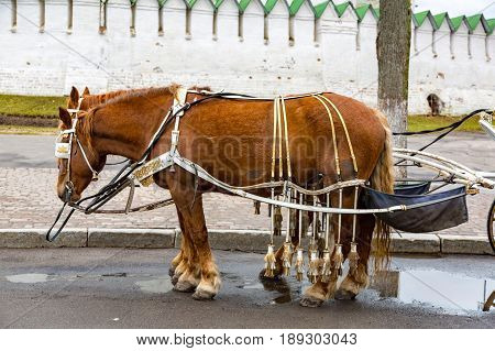 Harnessed Street Horse