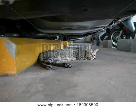 Cat Lays Down Under Car in Garage
