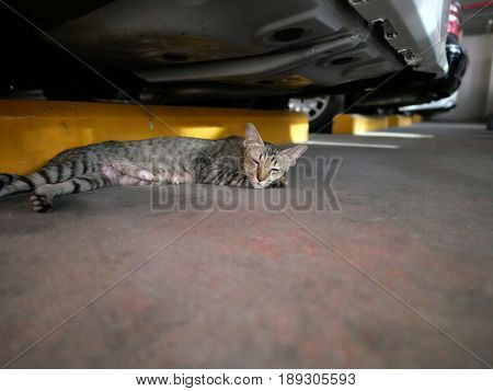 Cat Sleeps Under A Car in Garage