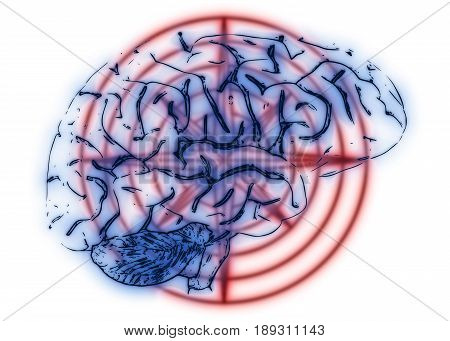 3D Illustration of a human brain on a white background.