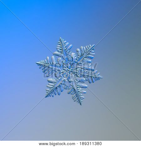 Real snowflake macro photo: small snow crystal of stellar dendrite type with glossy, relief surface, six short arms with lots of side branches. Snowflake sparkle on bright blue - gray background.