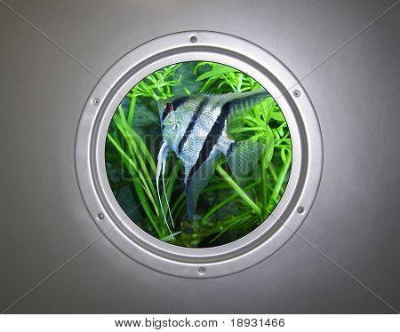 Submarine. Fish in the window.