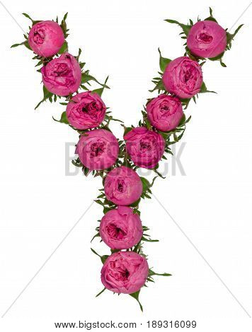 Letter Y Alphabet From Flowers Of Roses, Isolated On White Background