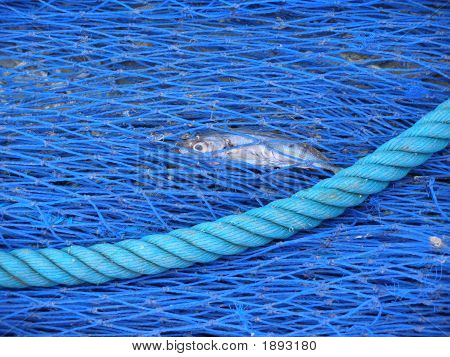 Blue Net N Fish