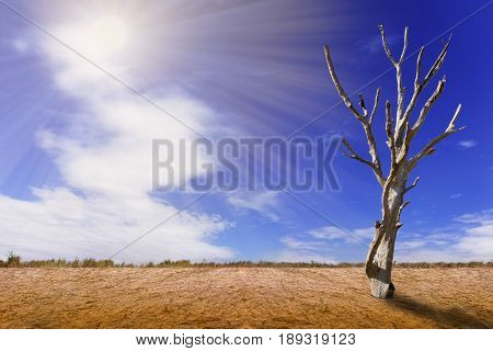 View of dead trees in the summer atmosphere.