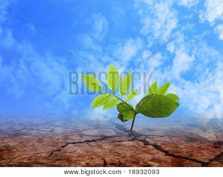Braird on the cracky soil & blue cloudy sky