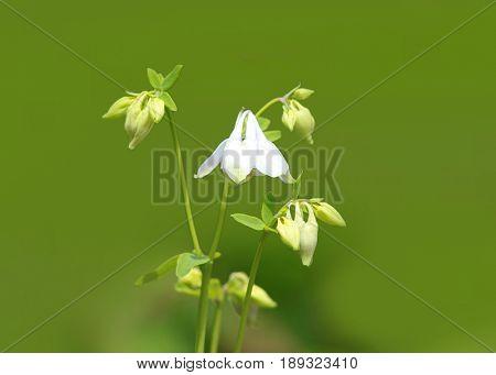 Close up shot of snow drop flowers