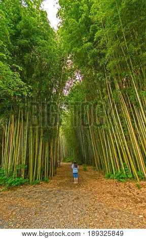 Looking up into a Bamboo Forest in Oconaluftee Islands Park in Cherokee North Carolina