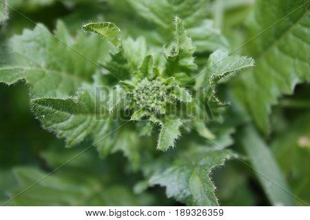 Young Green Grass After Rain Close-up