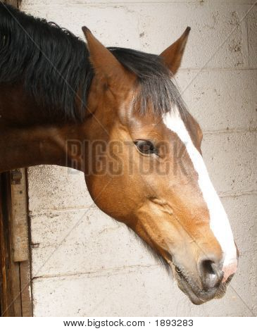 Horse's Head looking out at the world over the stable door. poster
