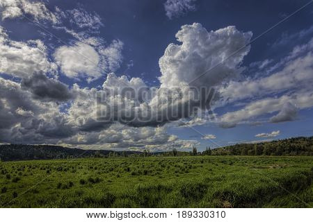 Large Cumulus Clouds in a bright blue sky over a lush green pasture.  Landscape scene near the Snoqualmie River in western Washington with large cloud formations.