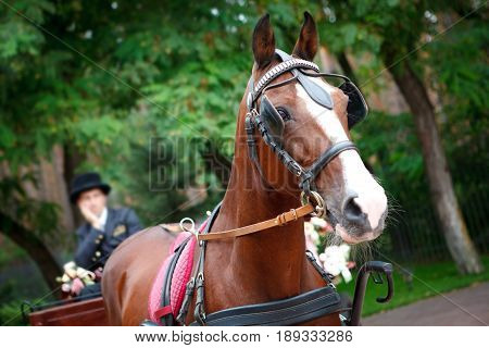 horse-drawn carriage driven by a bored coachman