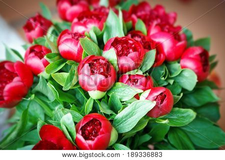 Pattern of a bouquet of bright red peonies