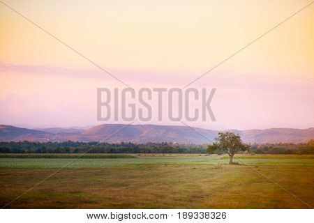 Lonely tree in the foothills of the Carpathian mountains in the evening haze