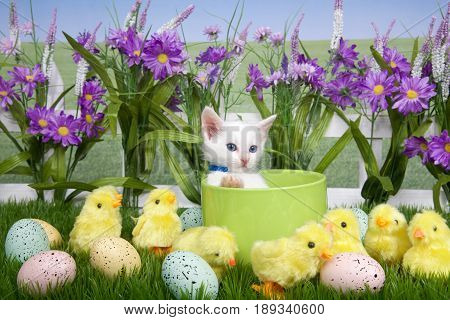 One fluffy white kitten laying in a green planter bowl up away from fuzzy yellow chicks and easter eggs in green grass white picket fence background with tall purple flowers blue sky behind.