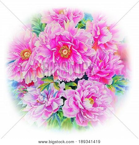 Watercolor pink flower painting original realistic colorful of paeonia flower in sky and whtie background with postcard congratulation