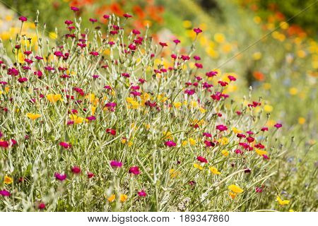 Garden detail with red geen yellow pink and orange flowers