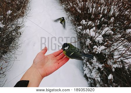 Small birds as a friend on hand in winer day