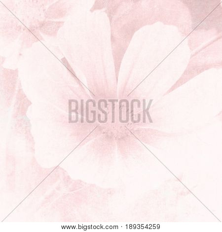 Soft pink flower background in pastel watercolor