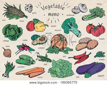 vegetable menu, garlic, mushroom, tomato, arugula, cucumber, pepper,  corn, carrot, potato, broccoli, avocado, radish, chili, pumpkin, eggplant, celery, onion, maize, cabbage, leek, pea