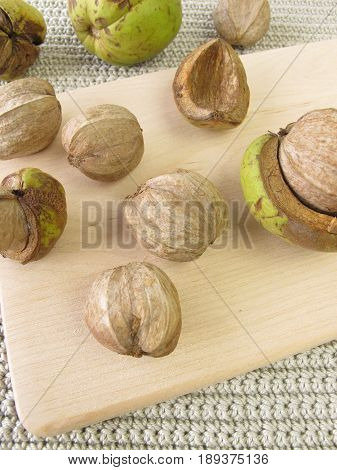Shellbark hickory nuts on wooden board, carya laciniosa