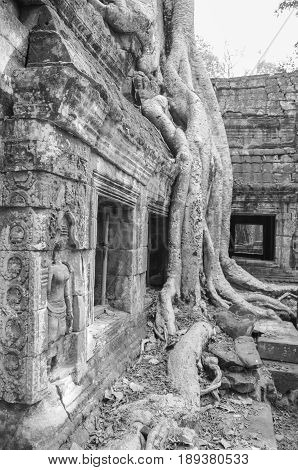 Architecture of old buddhist in Angkor Archeological park. Monument of Cambodia - Siem Reap. Popular movie scenery.
