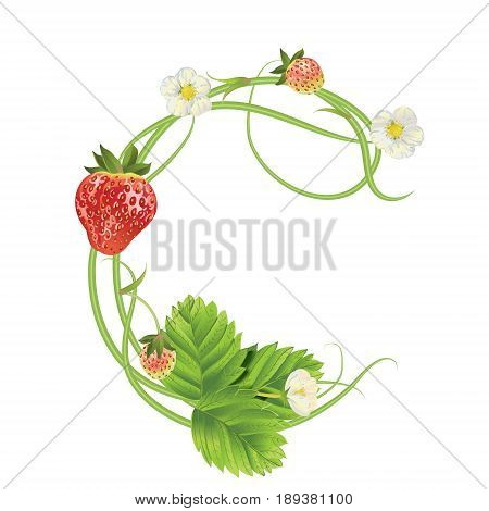 Letter C Strawberry font. Red Berry lettering alphabet. Vector realistic illustration ABC. Design for grocery, farmers market, tea, natural cosmetics, summer garden design element.