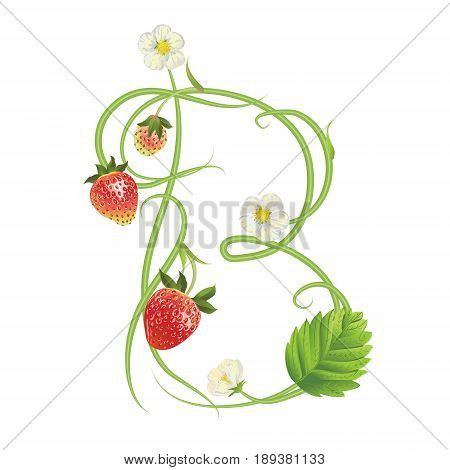 Letter B Strawberry font. Red Berry lettering alphabet. Vector realistic illustration ABC. Design for grocery, farmers market, tea, natural cosmetics, summer garden design element.