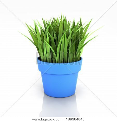 Flowerpot With Green Grass Isolated On White Bakground With Reflection 3D
