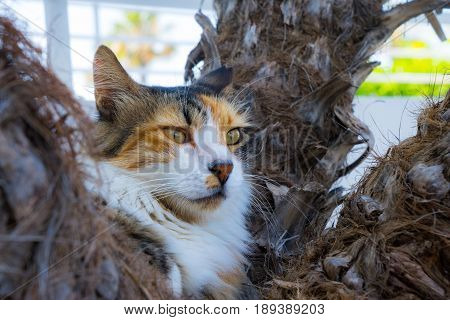 Wild lazy cat lounging cat on the palm tree