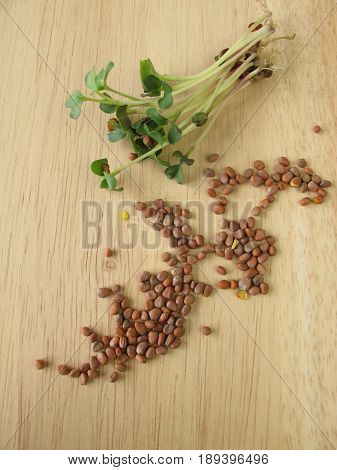Radishes seeds and sprouts on wooden board