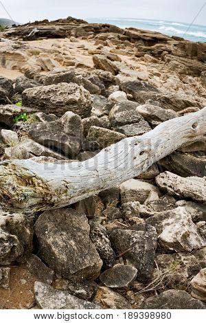 In South Africa    Branch Dead  Tree Coastline