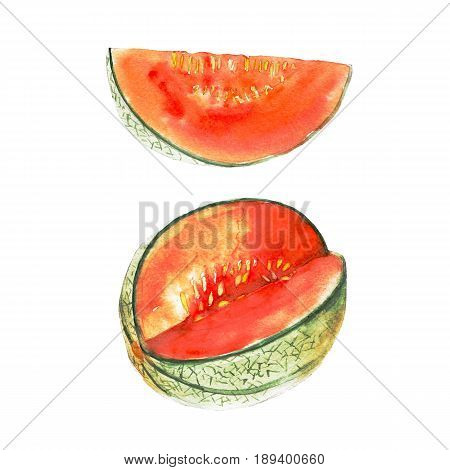 The magenta melon isolated on white background watercolor illustration fruit set in hand drawn style.