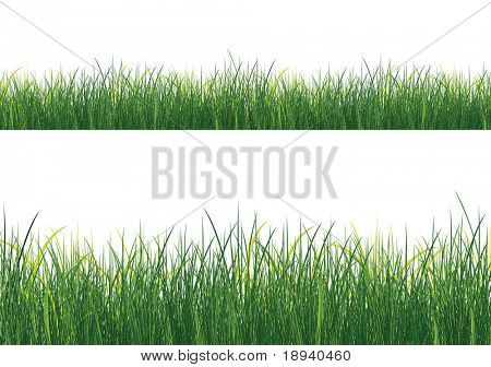 Isolated Grass on white background. Vector.