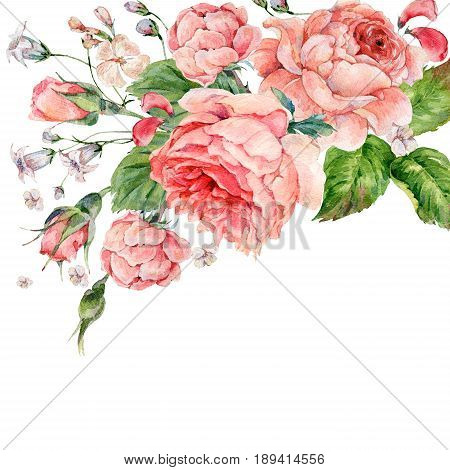 Beautiful vintage watercolor pink english roses, Watercolor natural greeting card with flowers, botanical illustration isolated on white background